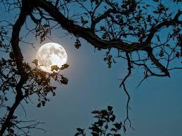 luna p